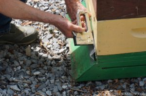 Installing a robber screen on a bee hive