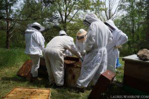 beekeeper, honeybees, honeybees bee hive