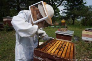 openign a honeybee hive beekeeping beekeeper