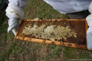 Capped honey beehive frame beekeeping honeybee